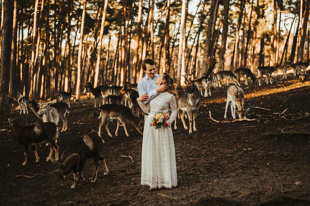 wildtierpark paarshooting rehe - karina sowa fotografie